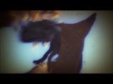Революция динозавров (Эра динозавров) 3 Тактика выживания Discovery HD