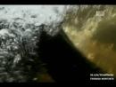 Укротители аллигаторов. Бушующие аллигаторы
