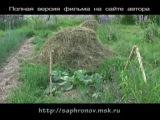 Огород (огуречные) в родовом поместье. Олег Сафронов