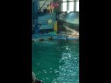 Дельфинарий на крестовском))
