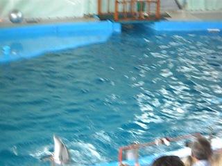 Дельфинарий)))ВСЕ ВИДЕЛА СВОИМИ ГЛАЗАМИ!!!
