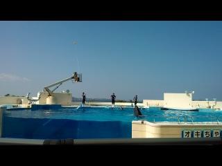 Шоу дельфинов и китов. Окинава.
