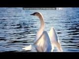«Ёлочка 2015» под музыку Музыка без слов... - очень красивая и нежная мелодия. Picrolla