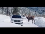 Пирс Броснан в рекламе КИА
