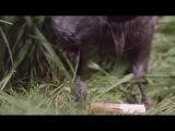 BBC Сверхъестественные способности животных 5 Паранормальные явления