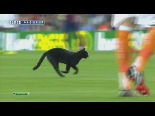 Матч «Барселона» - «Эльче» прервала черная кошка ...