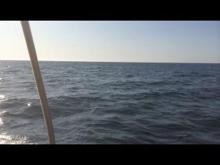 дельфины на берегу Евпатории (Крым)