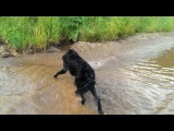 Первое плавание Трюфеля