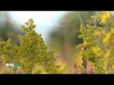 Прогулка по Геленджику (фильм RTG)