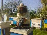 обробка бджіл від кліща (Біпіном-Т)