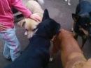Валя с Кешей и Тигой