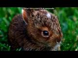 «Зайчики и кролики» под музыку Зайка - Песня про зайчика. Picrolla