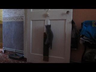 Мирка - моя дрессированная кошка!!!!! Куклачев нервно курит в сторонке!!!!!)))))