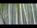 Бамбуковая роща Арасияма Киото 1