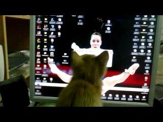 Котёнок на работе, бегает за курсором мышки на экране.