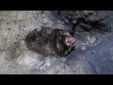 Писк Летучей мыши! Пашийская пещера 7.12.2014!