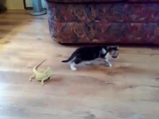 Kitten and lizards