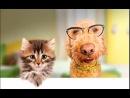 С Днём рождения Марина,кошки мишки собачки смешное ,доставим сюрприз неожиданно подарки для дочки девушки в санкт-петербурге