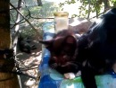 Котята ищут дом Срочно.. Мяу :3