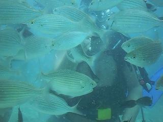Первое погружение с аквалангом! Г. Кемер, Турция.