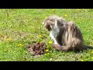 Как кот крота унизил! Смотреть до конца!