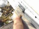 Пчёлы чистят улей от подмора. Ноябрь 2014.