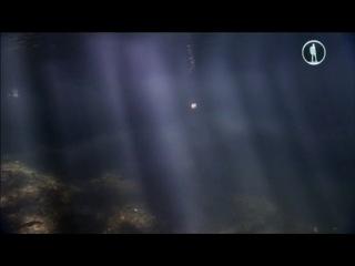 BBC 24 часа на Земле. Мир пробуждается ото сна (2013)