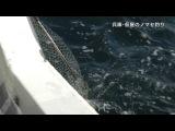 NMB48 Kadowaki Kanako - Big Fishing от 11 сентября 2014 г.