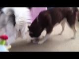 Dogs Like Socks
