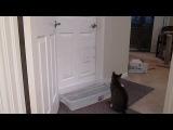 Кот сам открывает дверь.