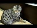 Дом для кота своими руками (Making a home for the cat) Часть 2