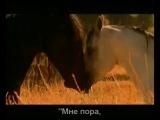 Красивая музыка о нежности и любви (Арабатский конь).mp4красивый клип