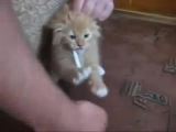 коты чудят! смешно очень