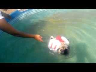 Если мой мопс не умеет плавать, я его научу