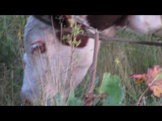 Корова на лугу: хроники сельской жизни