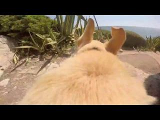 Эта собака ОЧЕНЬ любит море