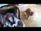 Кот впервые увидел ребенка