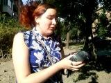 Лорка и голубь