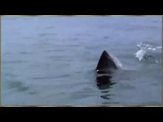 дельфин спас собаку