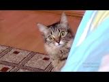 очень страшное видео с котом! Бууу!!!.mp4