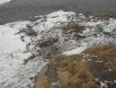Уборка территории набережной реки Застрянка. Команда Пираты города Нижнеудинска МКУ СОШ №10, 9 В класс