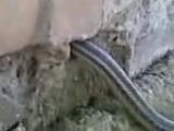 змея в могиле
