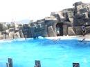 люди и дельфины