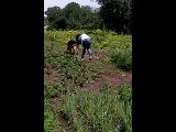 Как правильно выгулять собаку ))