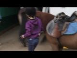 Спор на конюшне