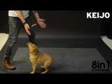 Как собаки реагируют на летающую сосиску? / How Dogs React to Levitating Wiener