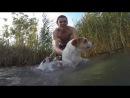 Как мой сын учил собачку плавать.
