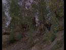 Волчья кровь (1995 г.). Лихие таёжные тропы...