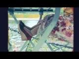 ▶ 【MV】 Hassan El Shafei ft. Abla Fahita - Mayestahlushi  | حسن الشافعي مع ابلة فاهيتا - #مايستهلوشي 【Official Video】 (2014) HD-720 ✔