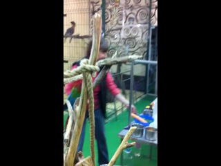 Цирк попугаев